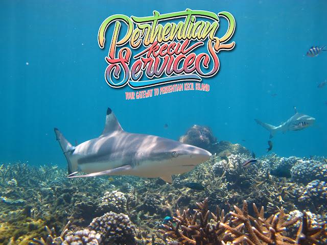 snorkeling package pulau perhentian kecil 2018 , pakej pulau perhentian terengganu , pulau perhentian besar 2018