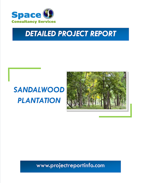 Project Report on Sandalwood Plantation, Project Cost and Profitability