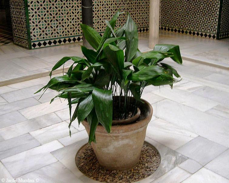 Plantas Exterior Resistentes Frio Y Calor Calor With Plantas With