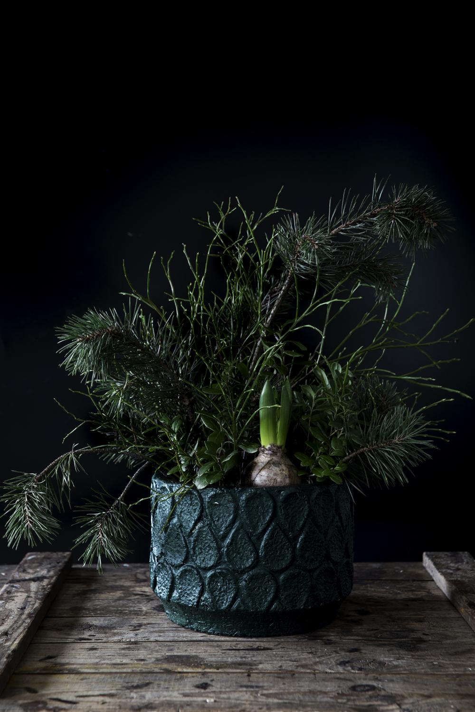 asetelma, vihreä, havut, joulu, syksy, Visualaddict, valokuvaaja, Frida Steiner, puolukanvarpu, metsän antimet