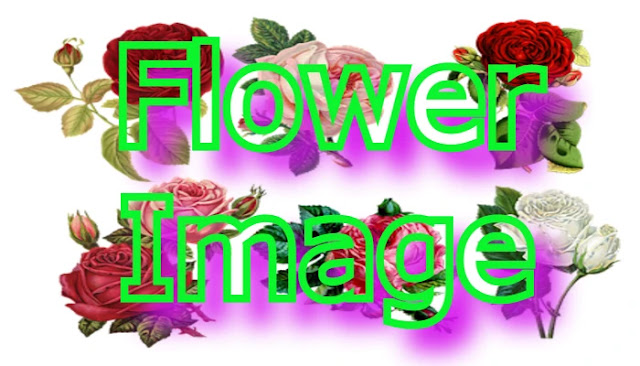 All Type of Flower Images With Name