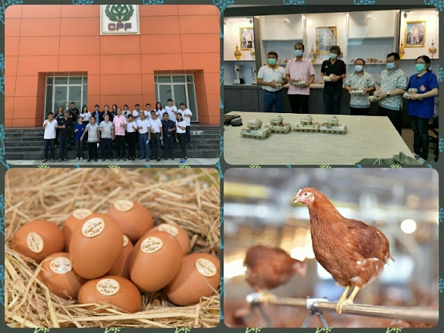 CP Foods Wang Somboon Farm certified for cage-free farming practice