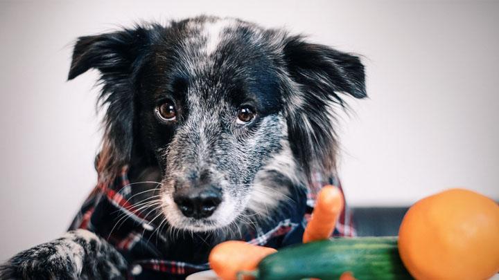 best-diet-dog-food