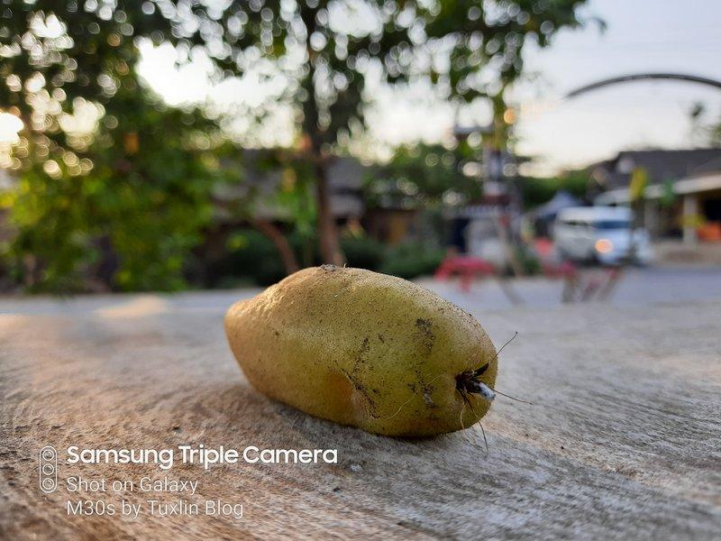 Hasil Foto Kamera Samsung Galaxy M30s