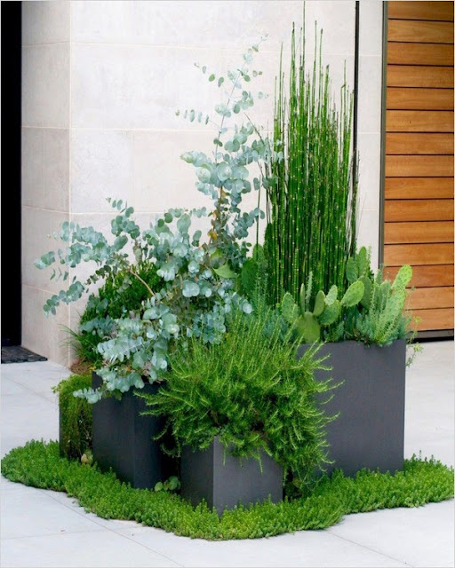 modern container gardening ideas for small spaces