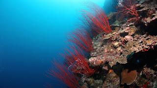 Coral reef 16