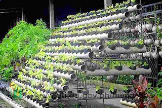 gardening ideas philippines