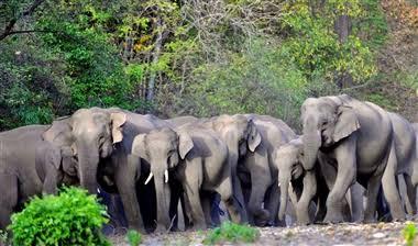 हाथी हमला : जिले में दंतैल का कहर,एक ही जंगल में हाथी के हमले से 2 की मौत,1 बच्ची घायल ,हाथी मौके पर मौजूद,वन अमला पंहुचा मौके पर,ग्रामीणों में दहशत,1 हफ्ते में दूसरी बड़ी वारदात,वन विभाग ने जारी किया अलर्ट,जंगल जाने पर प्रतिबंधात्मक धाराओं के तहत हो सकती है कार्यवाही।