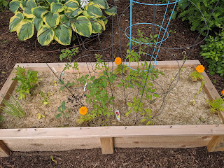my garden bed from the Fanuele's early in the growing season 2020