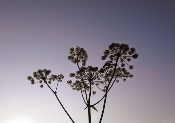 40+ nelkytplus blogi taivas kukka negative space valokuvaus photography