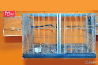Perawatan Burung Lovebird - Burung Lovebird - Perawatan Harian - Penangkaran Burung Lovebird