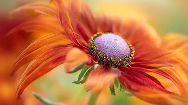 La belleza de las plantas y de las fotografías premiadas en IGPOTY 13