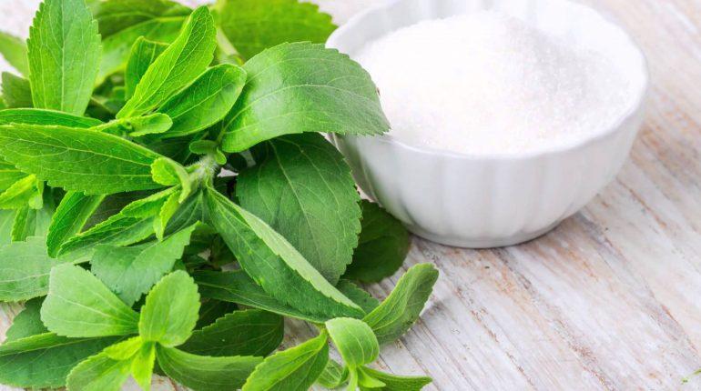 Folhas de Estévia: mais poderoso que o açúcar, e combate o diabetes tipo 2