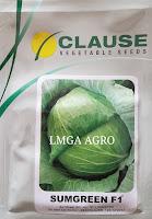 usaha kecil, usaha di desa, usaha sukses menjanjikan, toko pertanian, benih sayuran hibrida, lmga agro