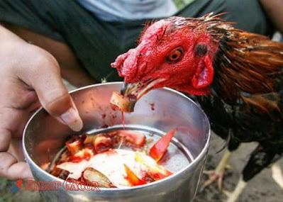 makanan penambah gizi ayam