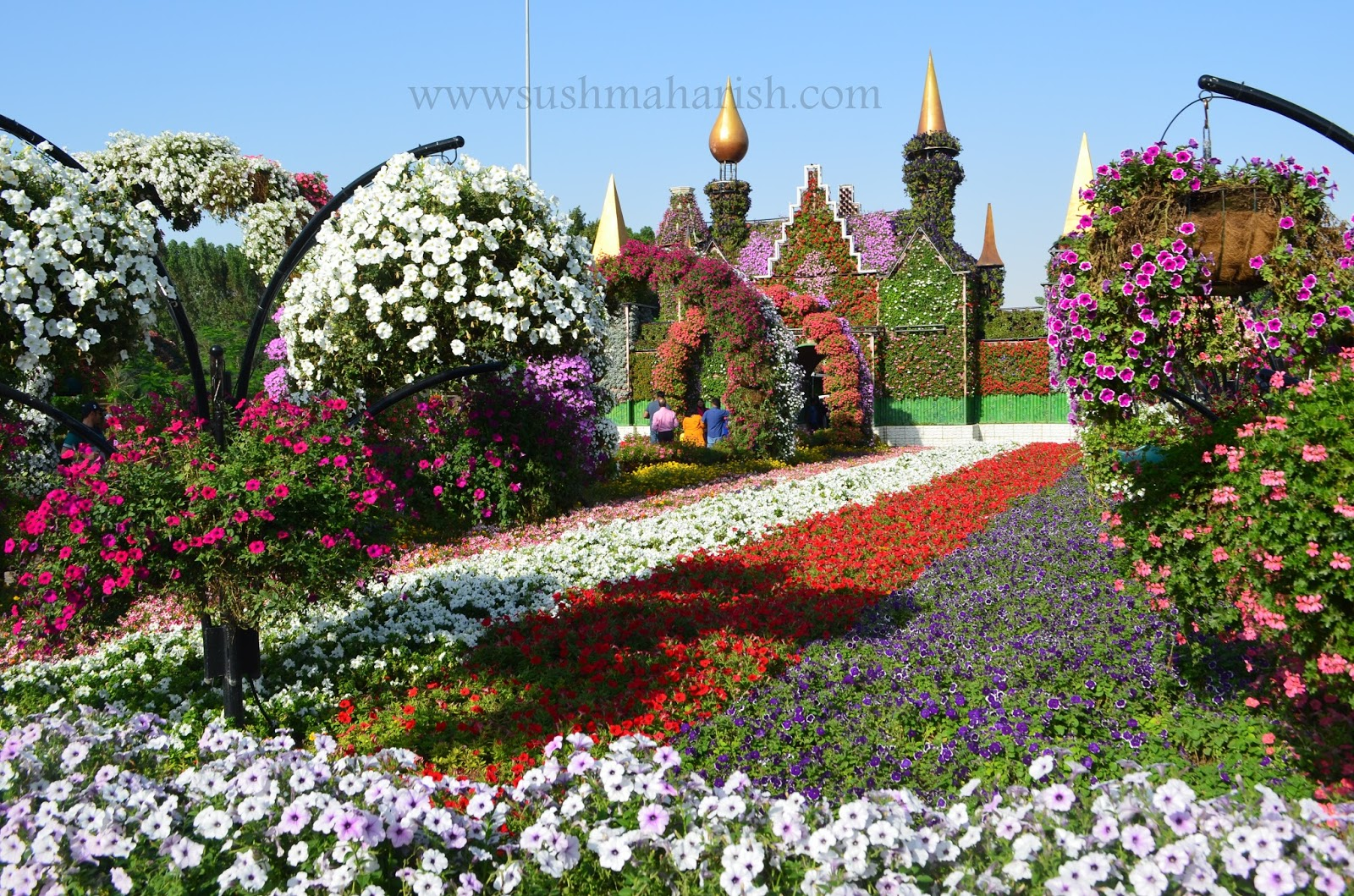 Exploring Beyond The Skyscrapers. Largest Flower Garden Of The World - Miracle Garden Dubai. 28