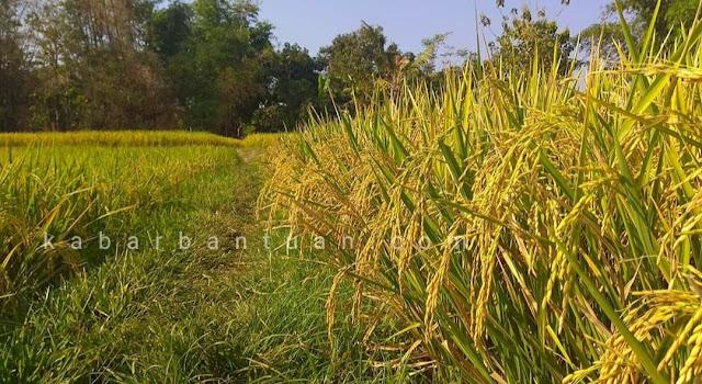 Kementan Serahkan Bantuan Pertanian Senilai 150 Milyar