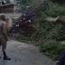 Miembros del Ejercito RD, laboran  junto a la defensa civil,cruz roja y policia nacional en operativo de recogida de arboles