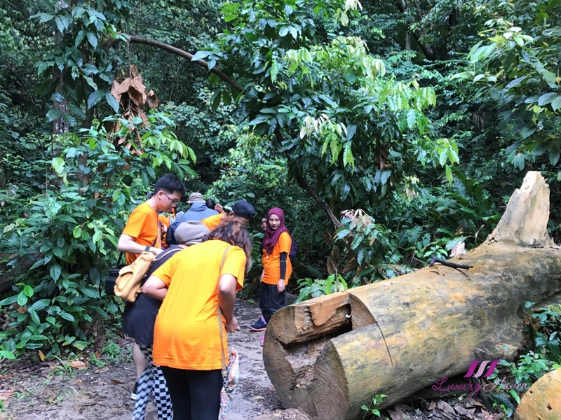malaysia tourism perak sg kooi waterfall trail