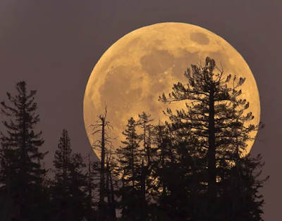 Hunter's Moon (ISTOCK)