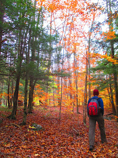 red backpack, fall forest