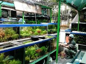 INILAH 4 TEMPAT BERBURU IKAN HIAS TERLENGKAP DI DKI JAKARTA