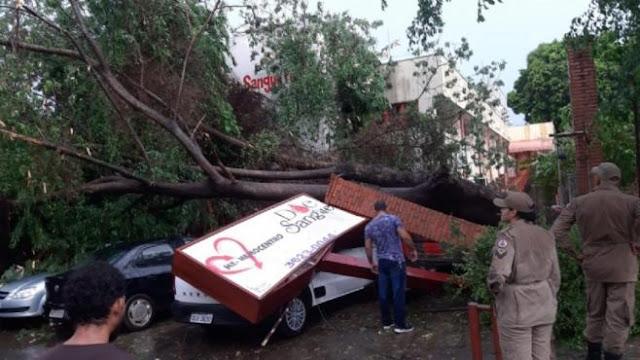 Forte temporal em Cuiabá e VG neste sábado derruba árvores sobre carros