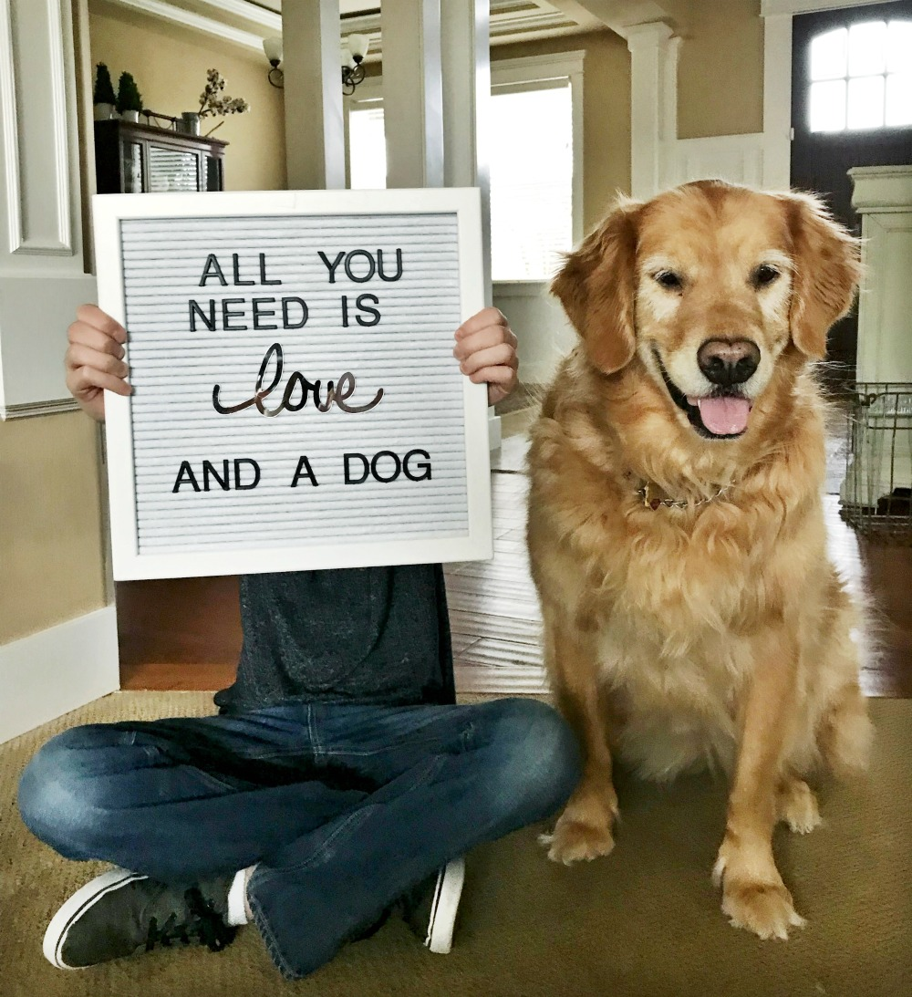 letter board, illustrated faith, quotes and sayings, all you need is love and a golden retriever dog