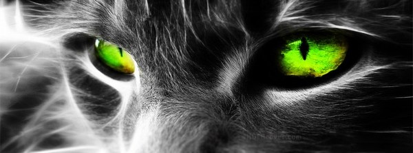 Black Cat Green Eye Fb Cover