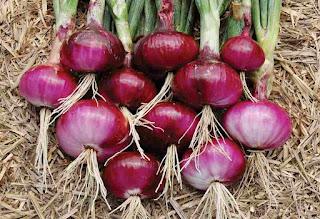 manfaat bawang merah pada tubuh