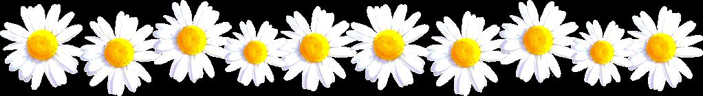 daisy%2Bdivider.png