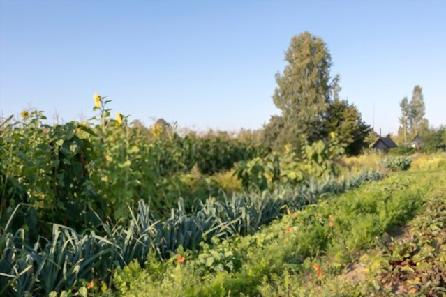Types of permaculture farming and garden