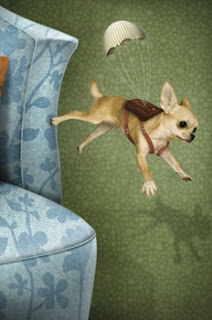 saltos de cães