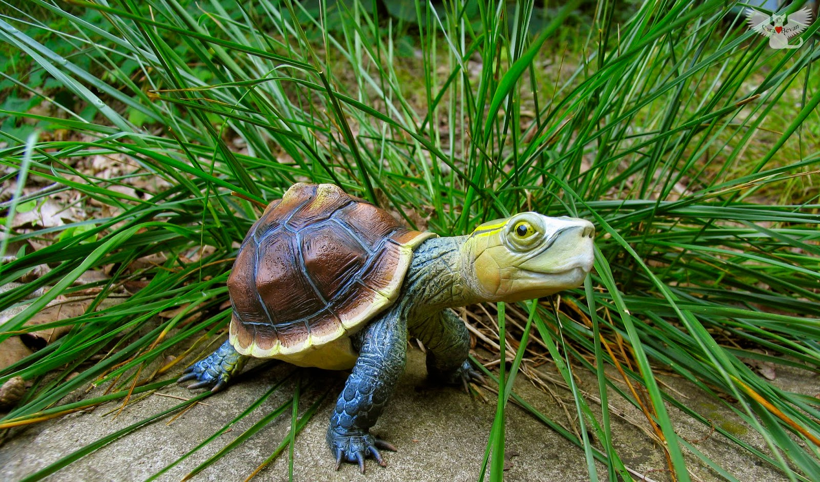 The Gourd Turtle Blog Gourd Turtle 21 Chinese Box Turtle