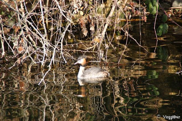 Uno degli uccelli presenti nel Laghi di Avigliana