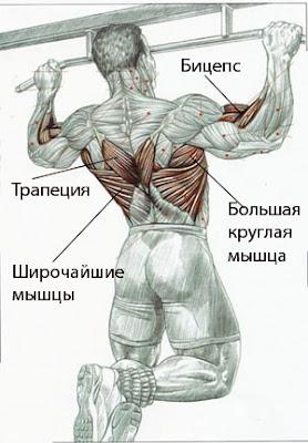 какие мышцы работают при подтягивание на турнике
