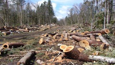 Kerusakan Lingkungan Akibat Aktivitas Manusia
