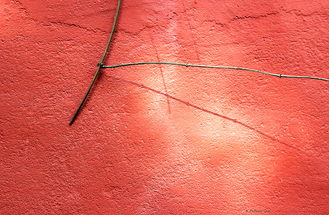 Minimalist Photo of Low Hanging Twig Of A Plant Against A Red Wall.