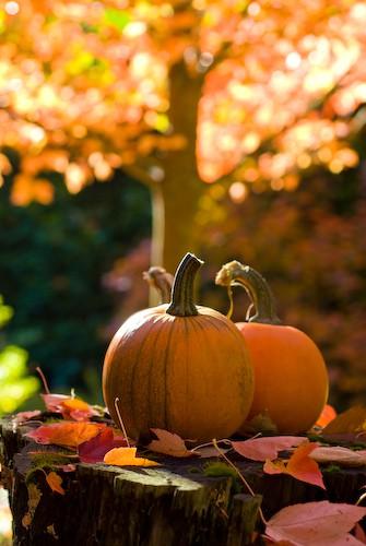 Happy Halloween…..