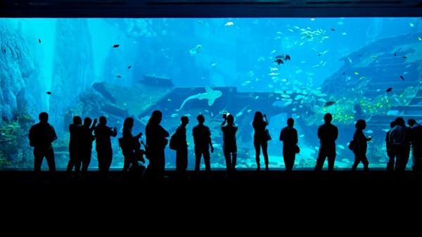 tham quan S.E.A Aquarium