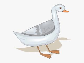 Gambar hewan angsa kartun yang mudah