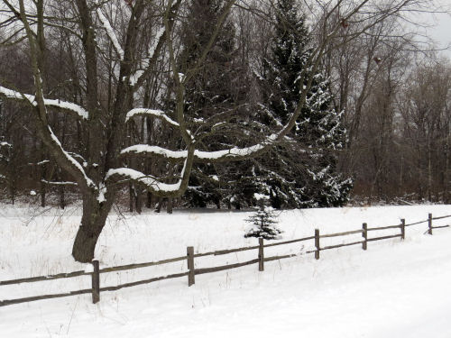 rail fence with snow