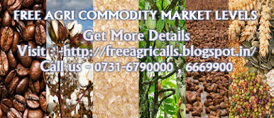 Agri commodity calls, Agri Commodity Tips, Free  Commodity Tips, Free Agri Tips, MCX Tips Services, Turmeric Tips,