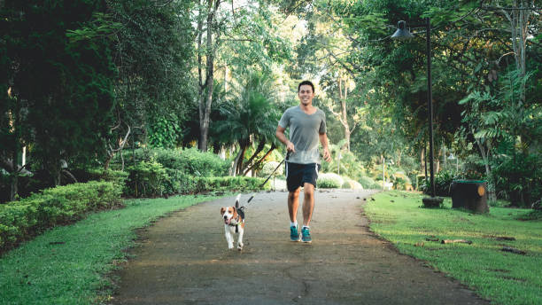 Exercising Your Puppy – The Importance of Doing It