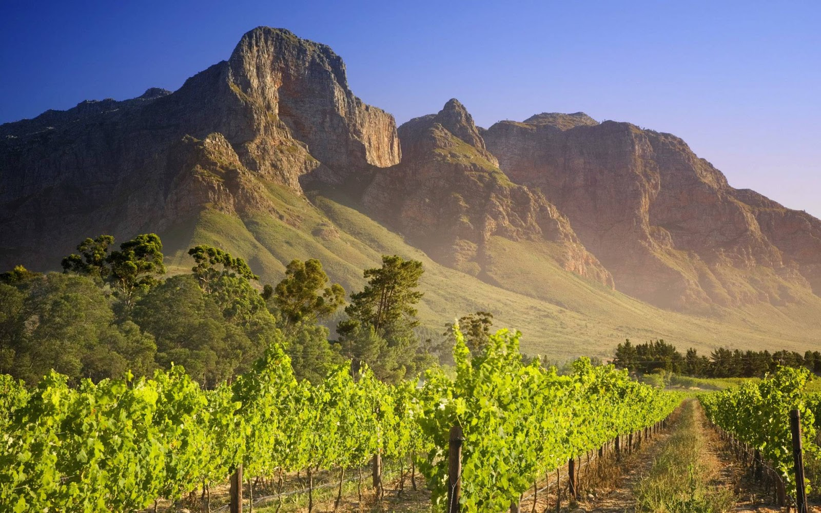 Vineyard South Africa wallpapers