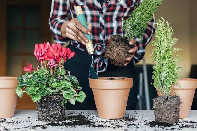 Заработок на выращивании комнатных растений в 2021 году