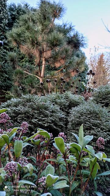 szron w ogrodzie