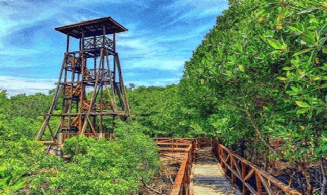 Wisata Mangrove Pulau Pannikiang