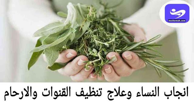 انجاب النساء وعلاج تنظيف القنوات والارحام