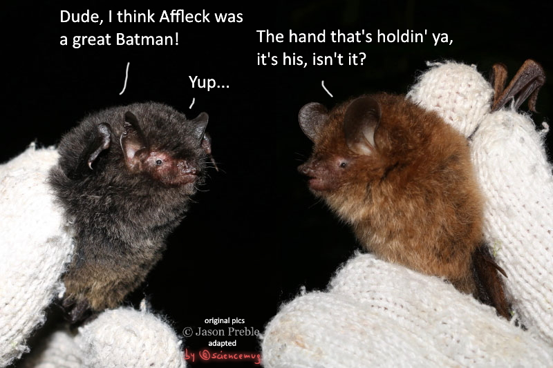 Two bats chatting about Batman